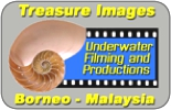 Treasure Images Productions