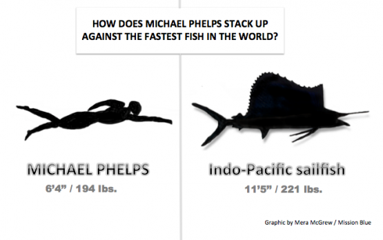 Michael phelps vs a sailfish can michael phelps beat the for What is the fastest swimming fish