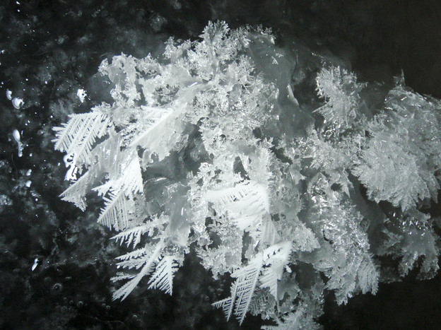 Frost Flowers grown in a lab
