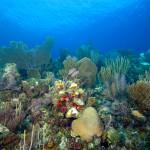 Cuban Coral Reef_MG_9074