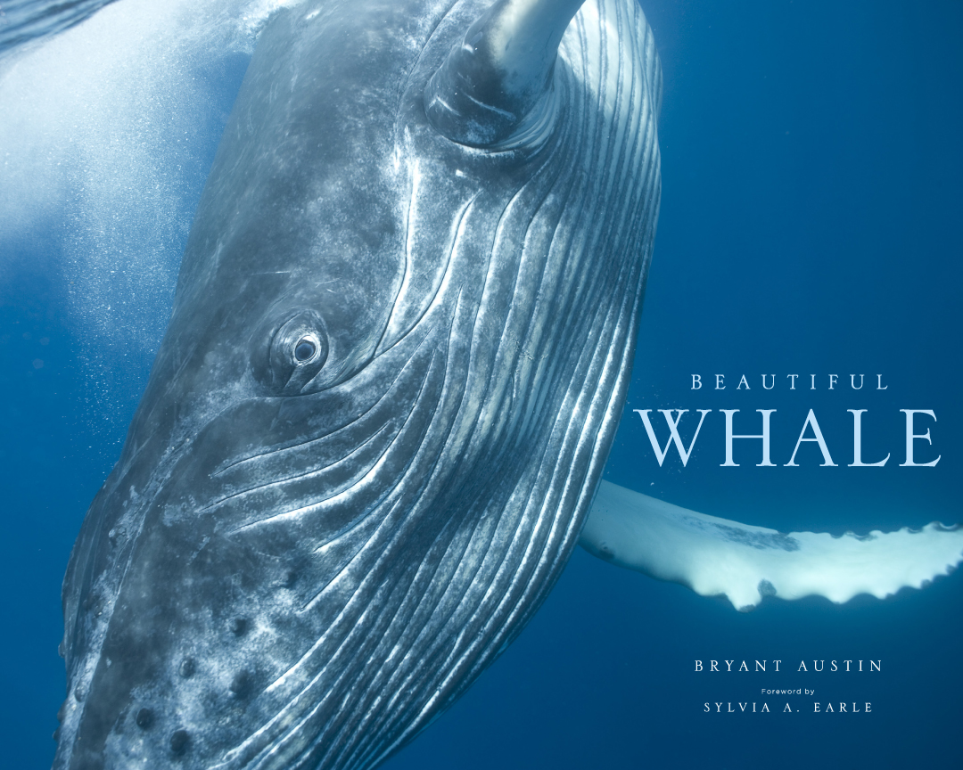 Beautiful Whale_cover