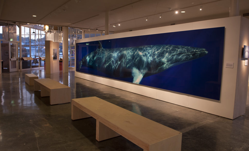 Austin's exhibition at the Museum of Monterey will be up through September 2, 2013