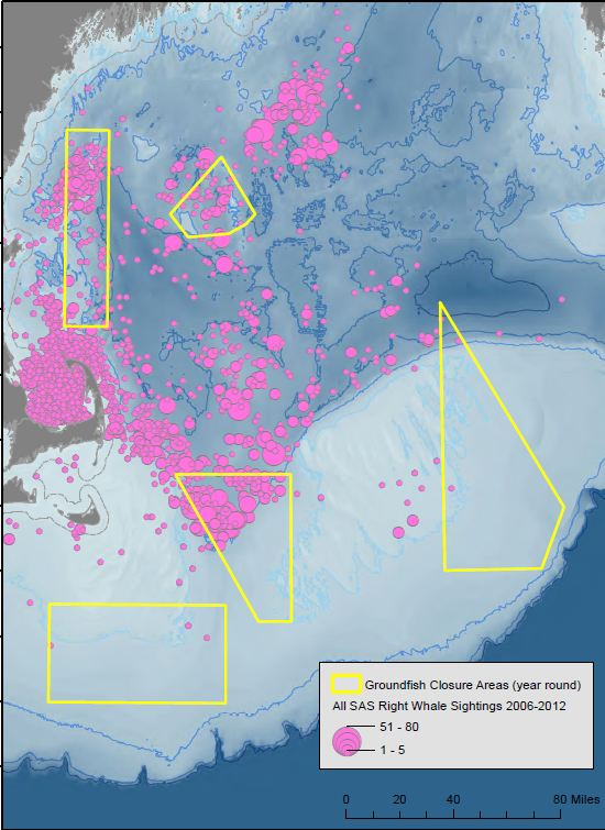 Right whales in closed areas map