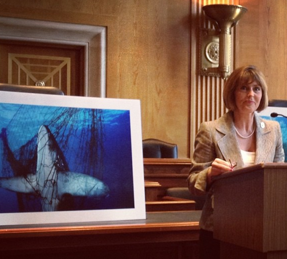 Representative Kathy Castor speaking at Healthy Ocean Hill Day alongside a photo by Brian Skerry (© Mary Kadzielski, Blue Frontier)