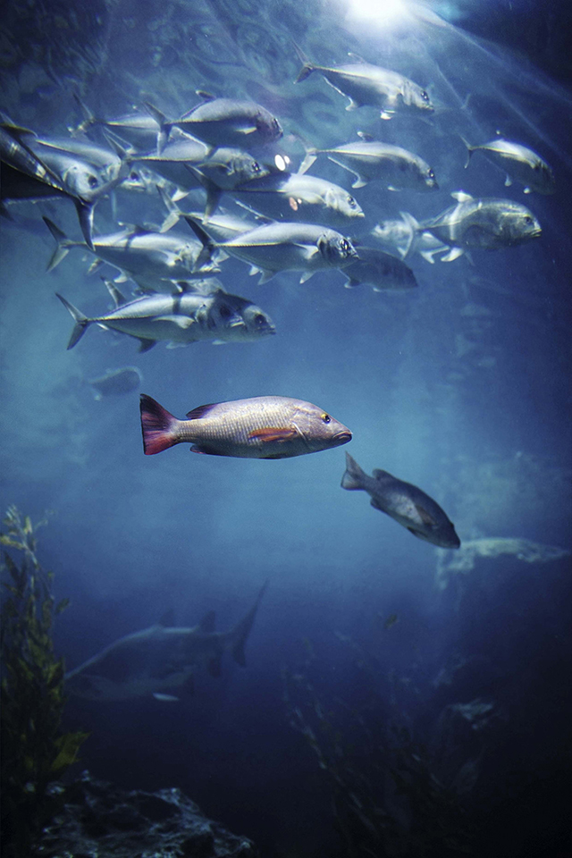 Local communities in Papua New Guinea are concerned that their tuna and fisheries industry will come under threat if Nautilus' Solwara 1 deep sea mining project goes ahead. Credit: iStockphoto | Yulia Popkova