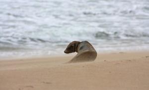 Among-the-Sand-Storm