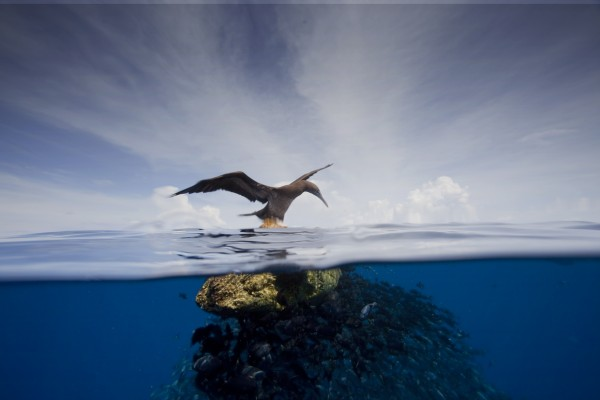 A booby alights on a log in the Central American Dome. Photo (c) Kip Evans/Mission Blue