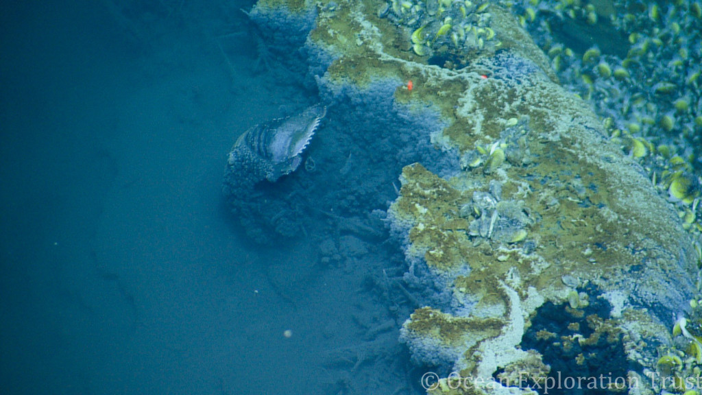 underwater volcano in gulf of mexico