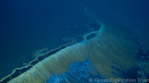 Gulf Of Mexico Brine Pools With Megan Cook Mission Blue