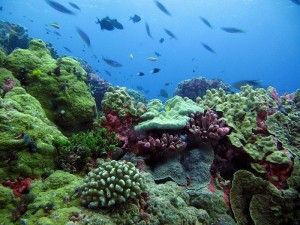 Coral reefs near Enderbury Island within the Phoenix Islands Protected Area. © Dr. Randi Rotjan, New England Aquarium.