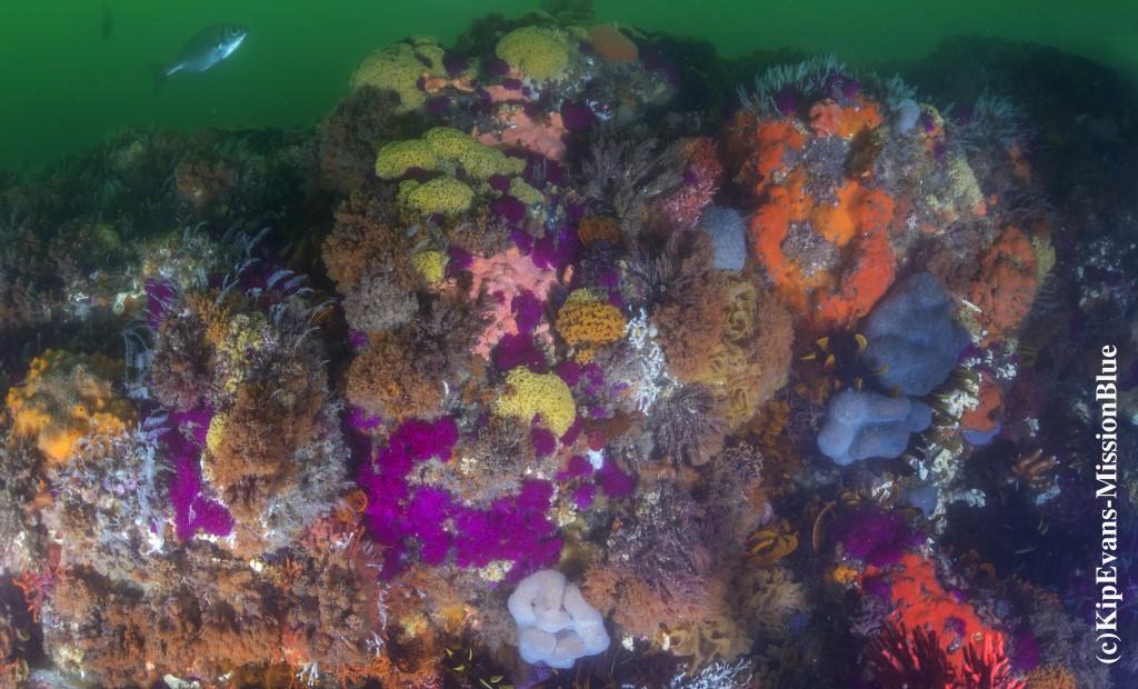 Algoa Bay Reef (c)KipEvans-MissionBlue