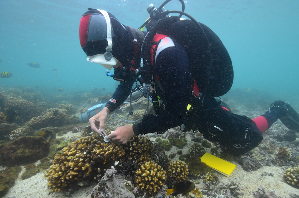 Diver surveying corals. Photo courtesy KSLOF.
