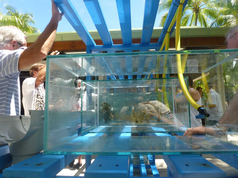 Post-larval reef fish and crustaceans will be cultured at the Tetiaroa Society EcoStation
