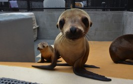 Ingrid Overgard / The Marine Mammal Center