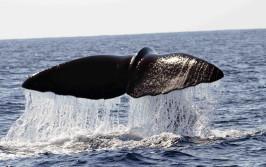 Biosphere-whaletale