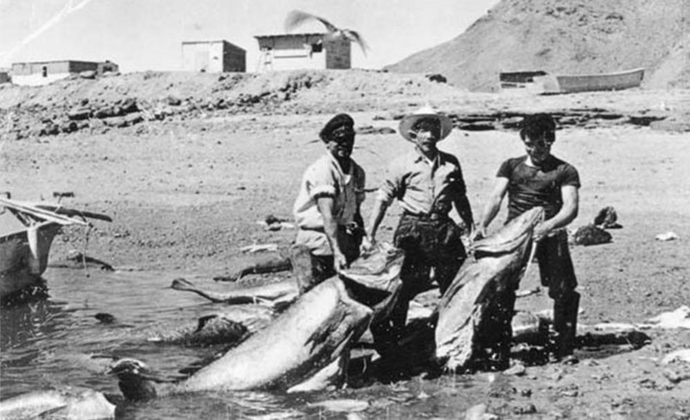 Baja Fishermen