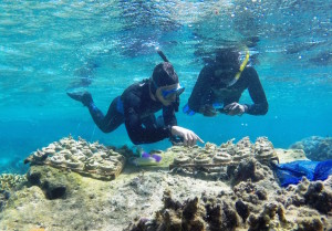 Reef Explorer's founder Victor Bonito (left) points out new coral growth to Conservation Assistant Samisoni Walai while examining trays of recently-propagated corals at the new coral nursery in Votua Village's no-take marine protected area. Image © Reef Explorer Fiji, Ltd.