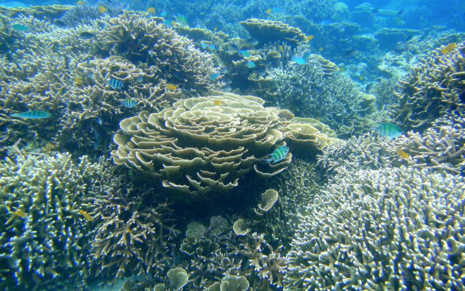 largest coral reef research - HD1024×768
