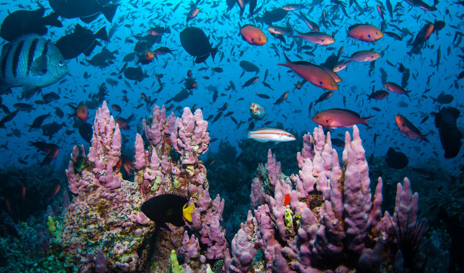 обитатели атлантического океана фото и названия жизни, легко иди
