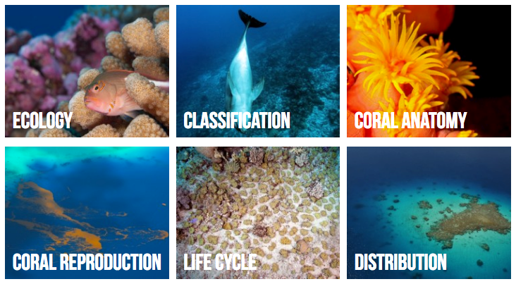 Dive Into The Underwater World Of Coral Reefs With The New Coral
