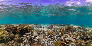 Impact of bleaching event on hard and soft corals. © Victor Bonito