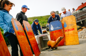 Connor Jay © The Marine Mammal Center