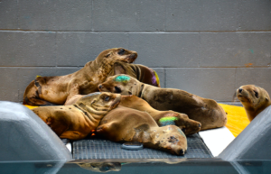Pat Wilson_© The Marine Mammal Center