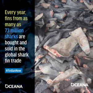 sharkfinsmacro