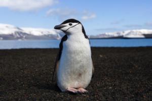@ Lifeline Antarctica