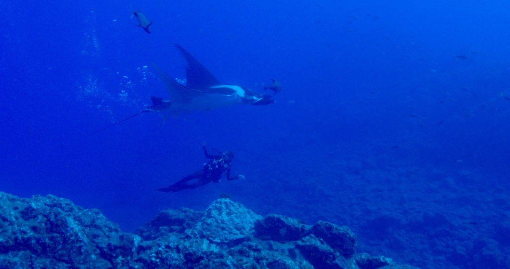 Andrea Asúnsolo Rivera of Pelagios Kakunjá swims with a manta. (c) 2017 Kip Evans Mission Blue
