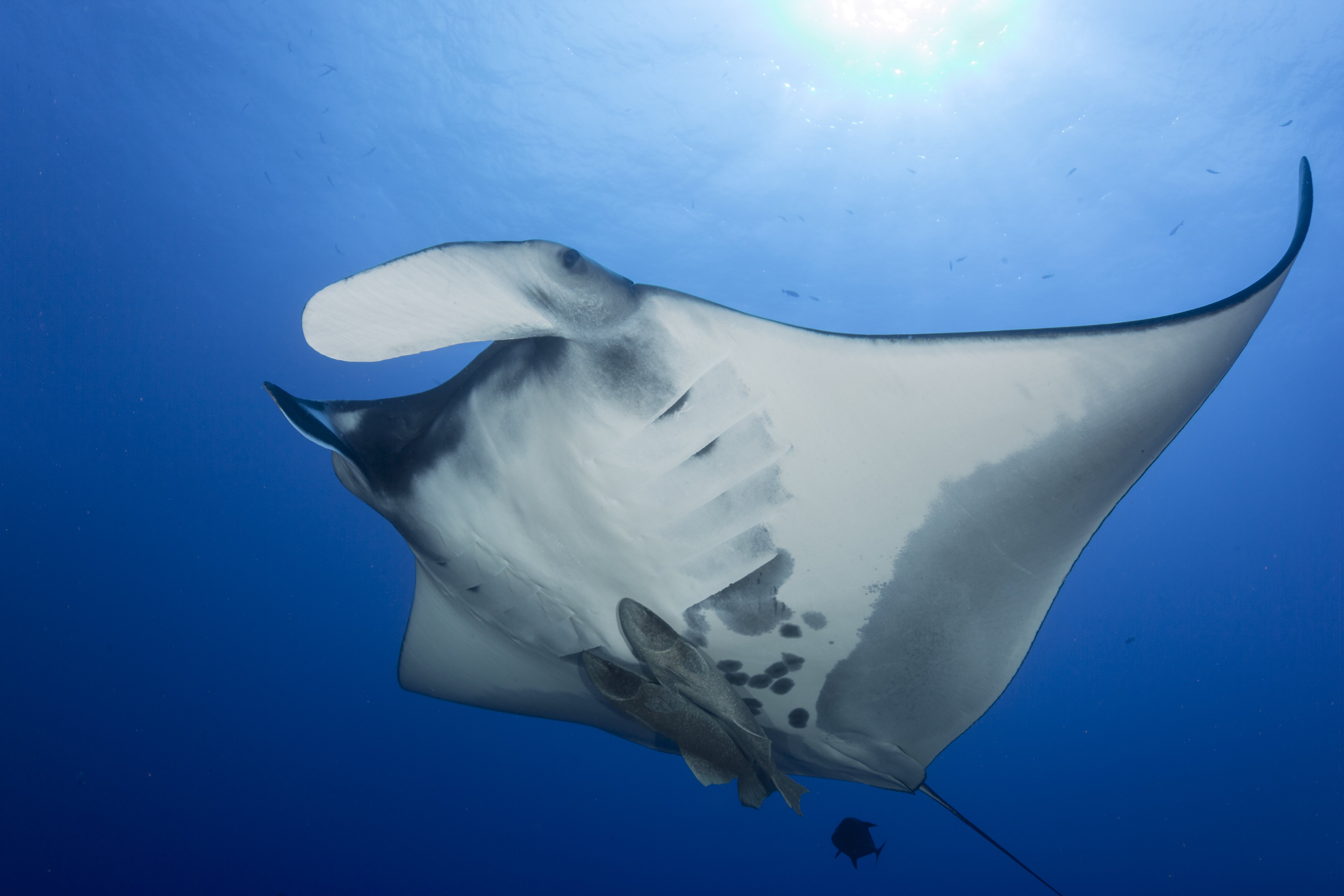 Our Offer as well Manta Rays And Microplastics further Jelly as well Best Windows 10 Store Games in addition Boussole D Orientation A10. on dive computer