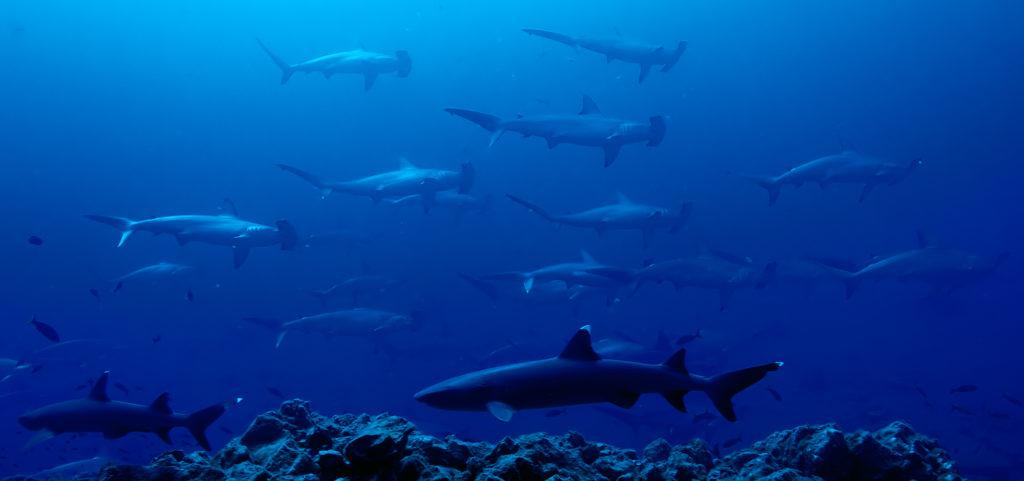 Museo atlantico new underwater museum in lanzarote spain for Spain underwater museum