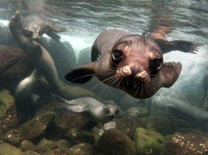 © Sandro Lonardi, Sea Lions, Galápagos Islands.