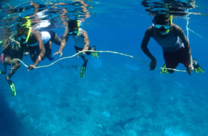Students in Bimini, The Bahamas snorkeling with Caribbean reef sharks (c) Jillian Morris