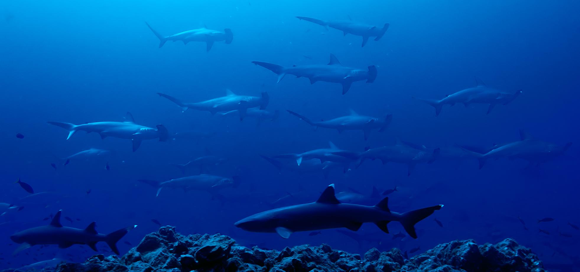 Shark Still2