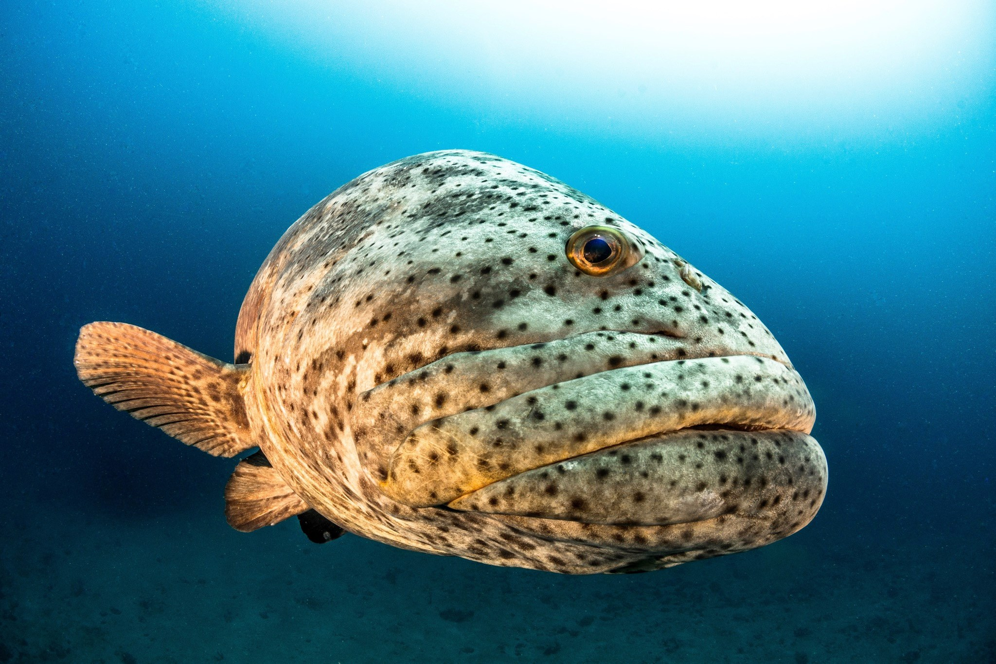 self proclaimed grouper capital of the world - HD 1200×800