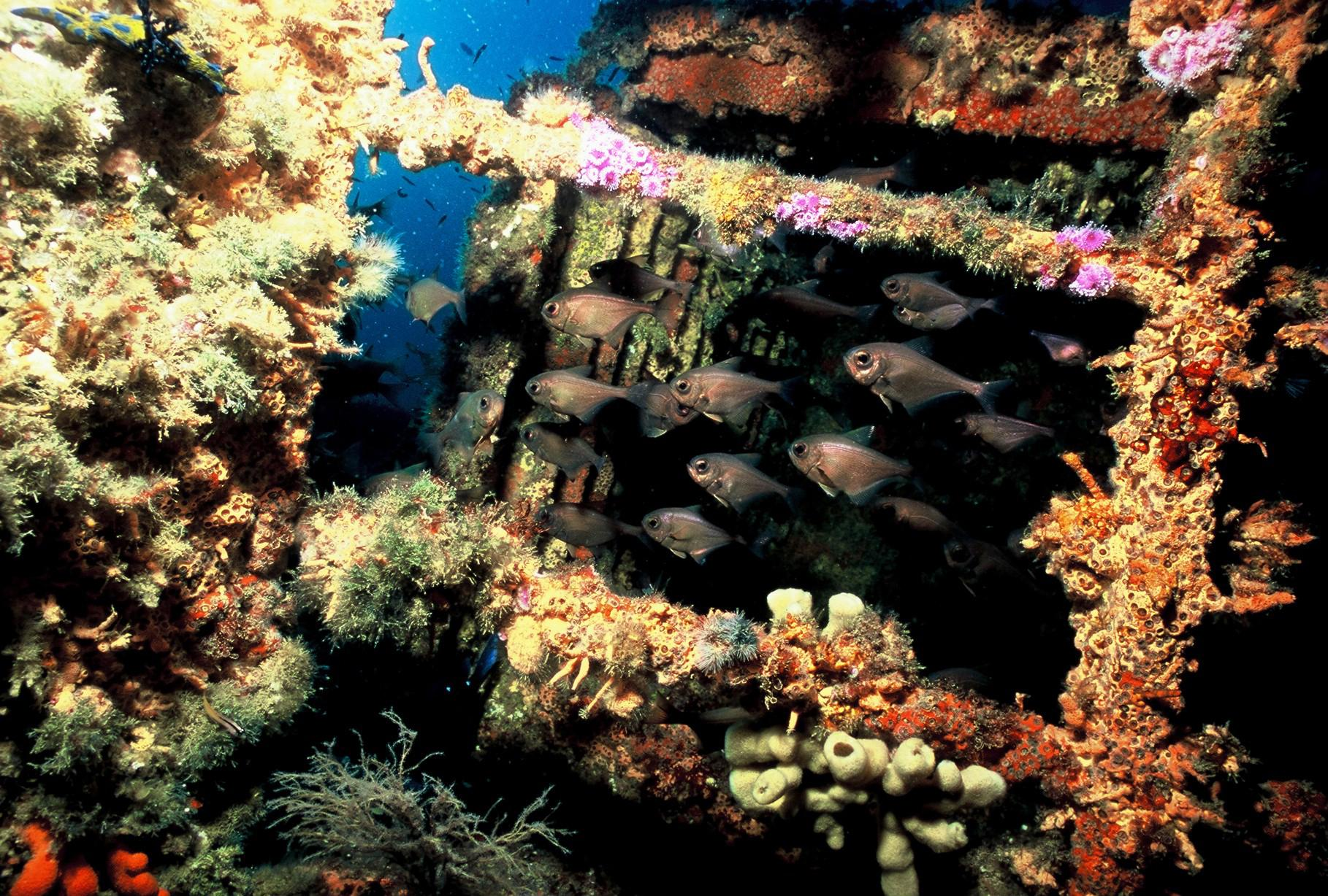 Image result for artificial reefs from oil rigs