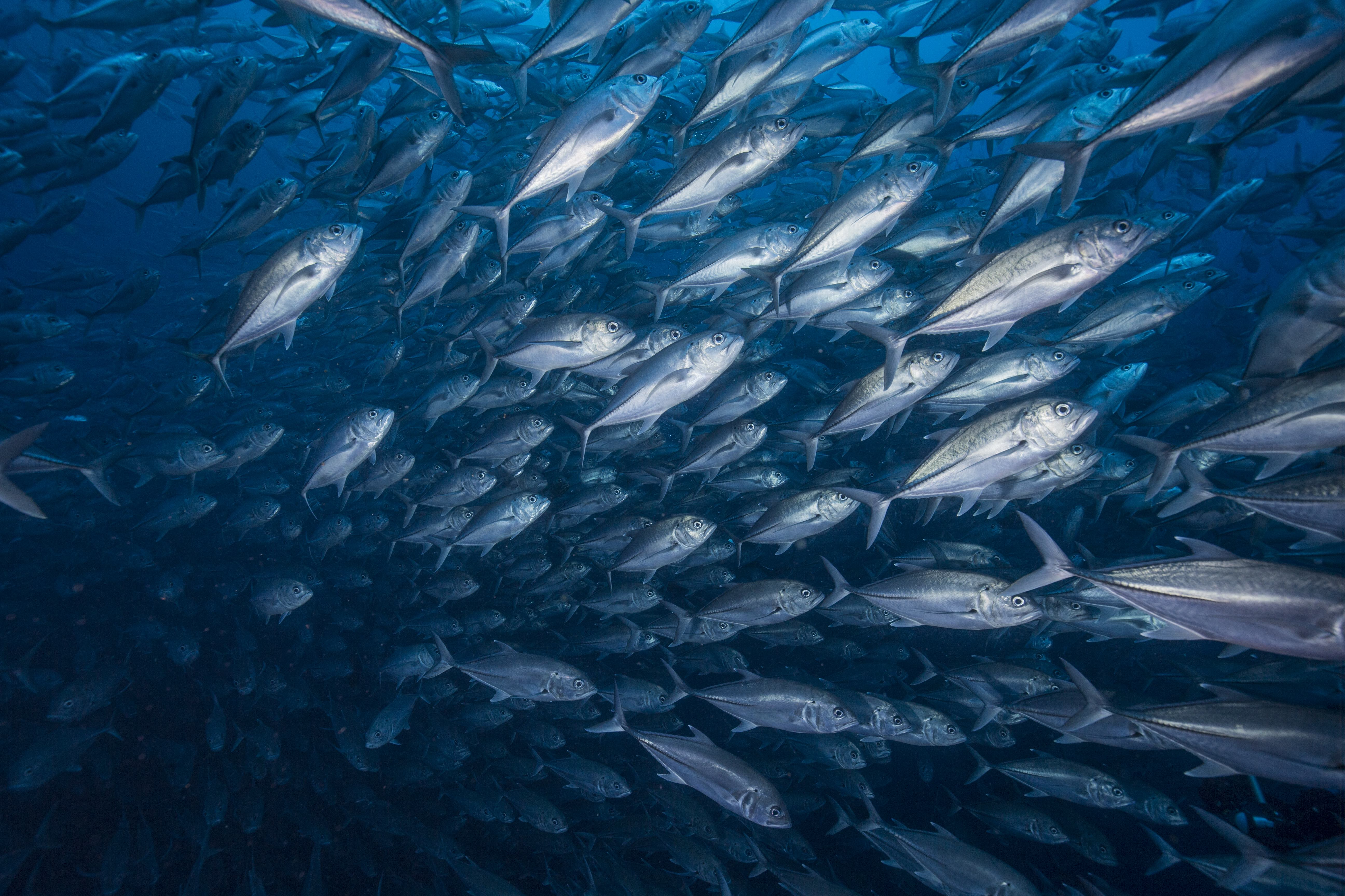Cocos island expedition a lesson in enforcement mission for The fishing school