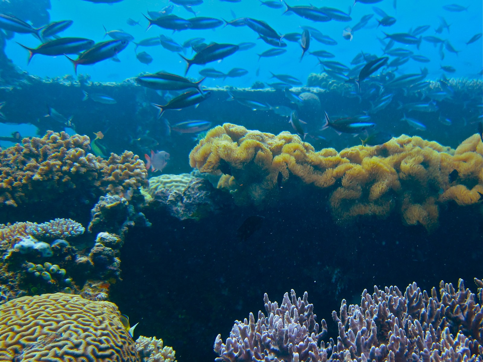 an essay on coral reefs The report, titled reefs at risk revisited, follows from the wri's 1998 assessment, reefs at risk, which described the potential threats to reefs and ignited interest in global coral conservation and research.