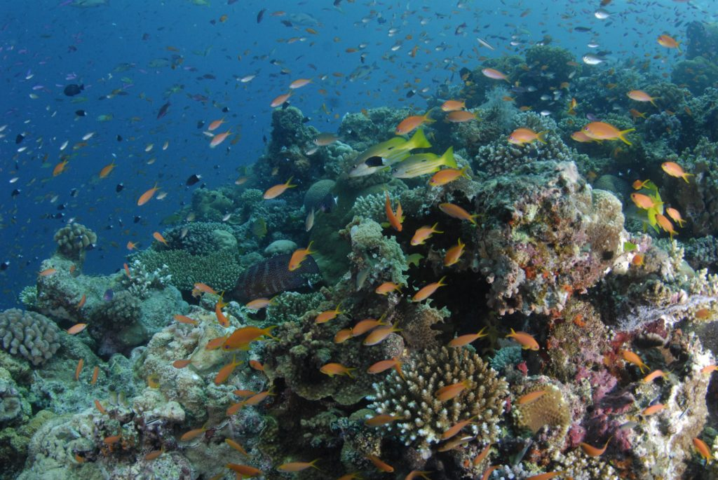 Coral Reef Ecosystem Chart – Articleblog info