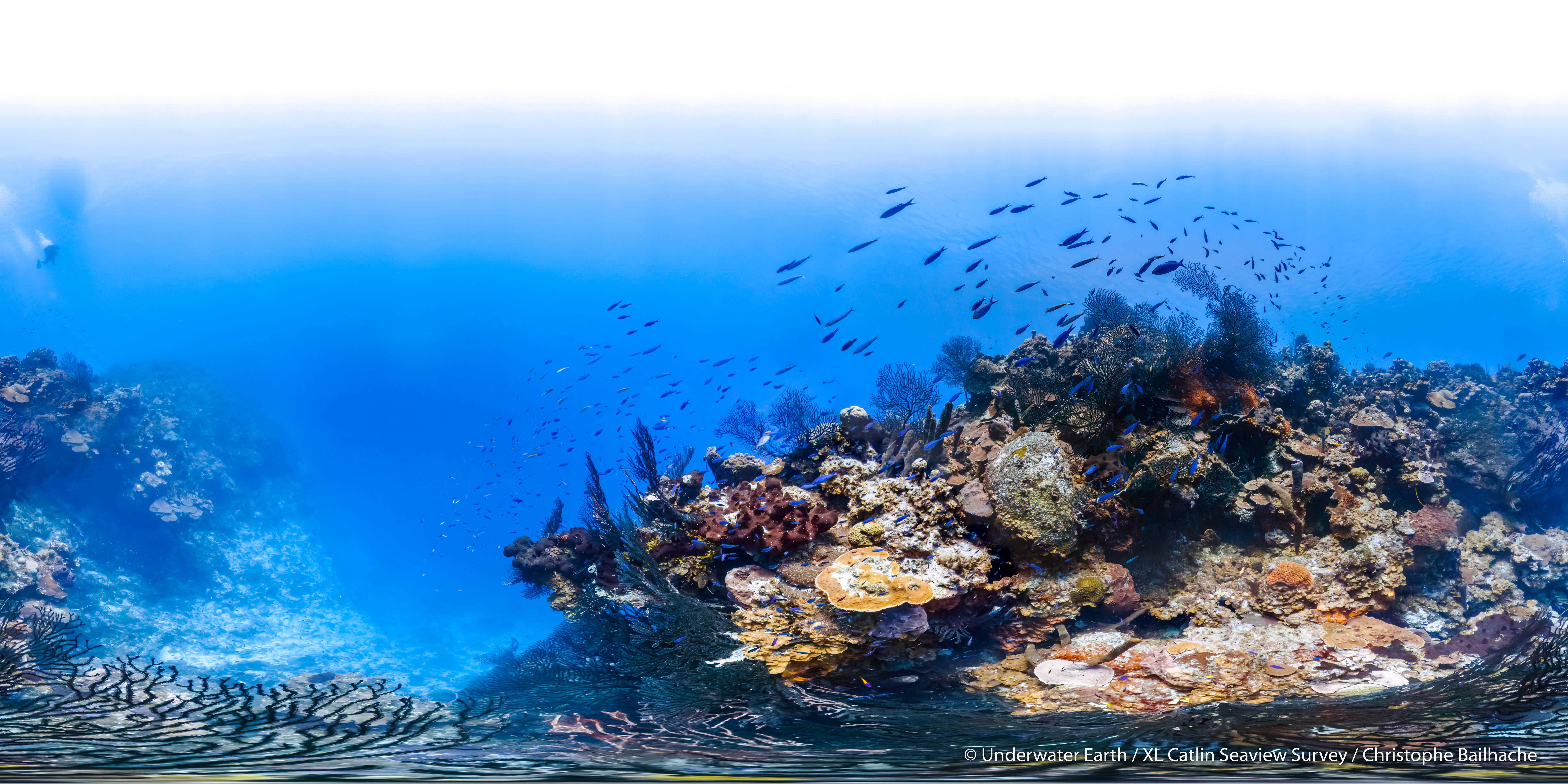 Bahamas on the Cusp of Making Long Island a Marine Protected ... on andros, bahamas, eleuthera bahamas, abaco bahamas, matthew town bahamas, san salvador bahamas, harbour island bahamas, ragged island, dean's blue hole, grand bahama, green turtle cay bahamas, paradise island, new providence, crooked island, hope town bahamas, inagua bahamas, grand cay bahamas, clarence town bahamas, freeport bahamas, rum cay bahamas, spanish wells bahamas, deadman's cay bahamas, cat island, berry islands, exuma bahamas, cat island bahamas, the bahamas, andros bahamas, ragged island bahamas, nassau bahamas, rum cay, half moon cay bahamas,