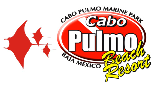 Cabo Pulmo Divers