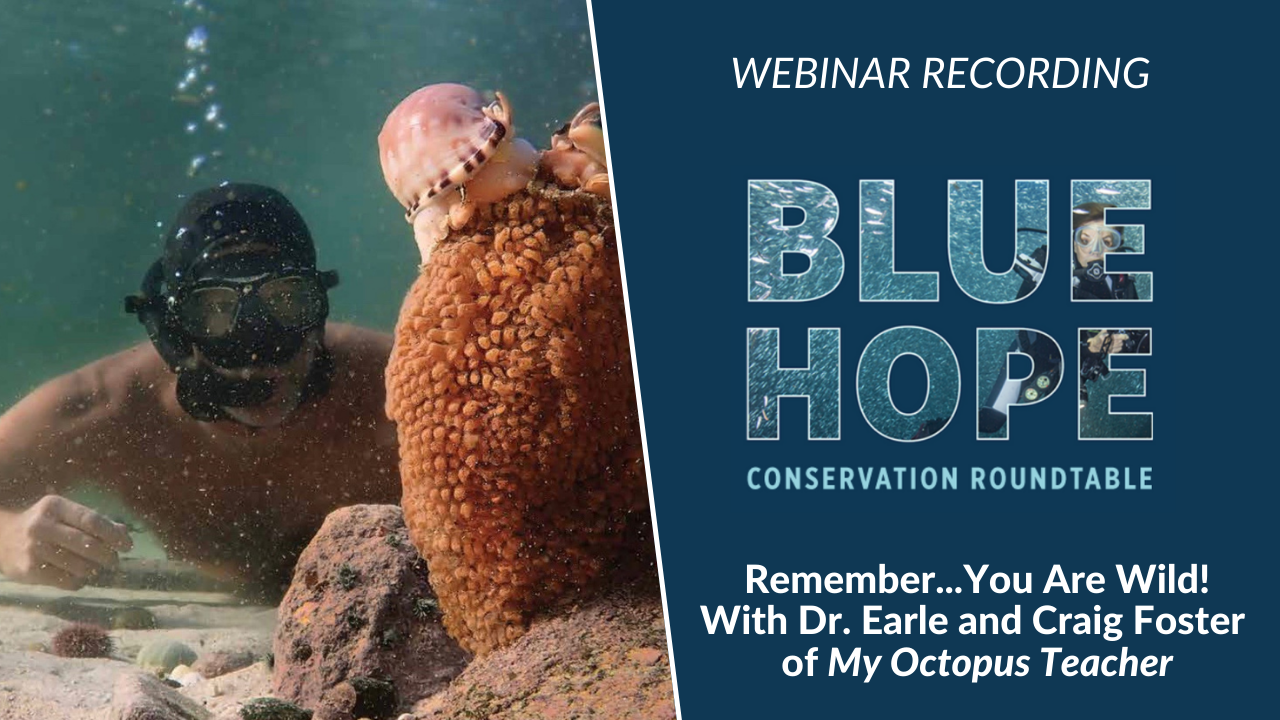 Remember… You Are Wild! A Conversation with Dr. Earle and Craig Foster, My Octopus Teacher