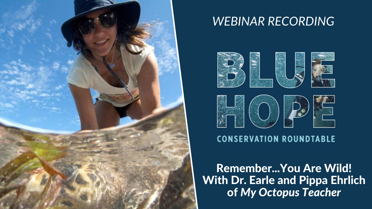 Remember… You Are Wild! A Conversation with Dr. Earle and Pippa Ehrlich, Co-Director of My Octopus Teacher